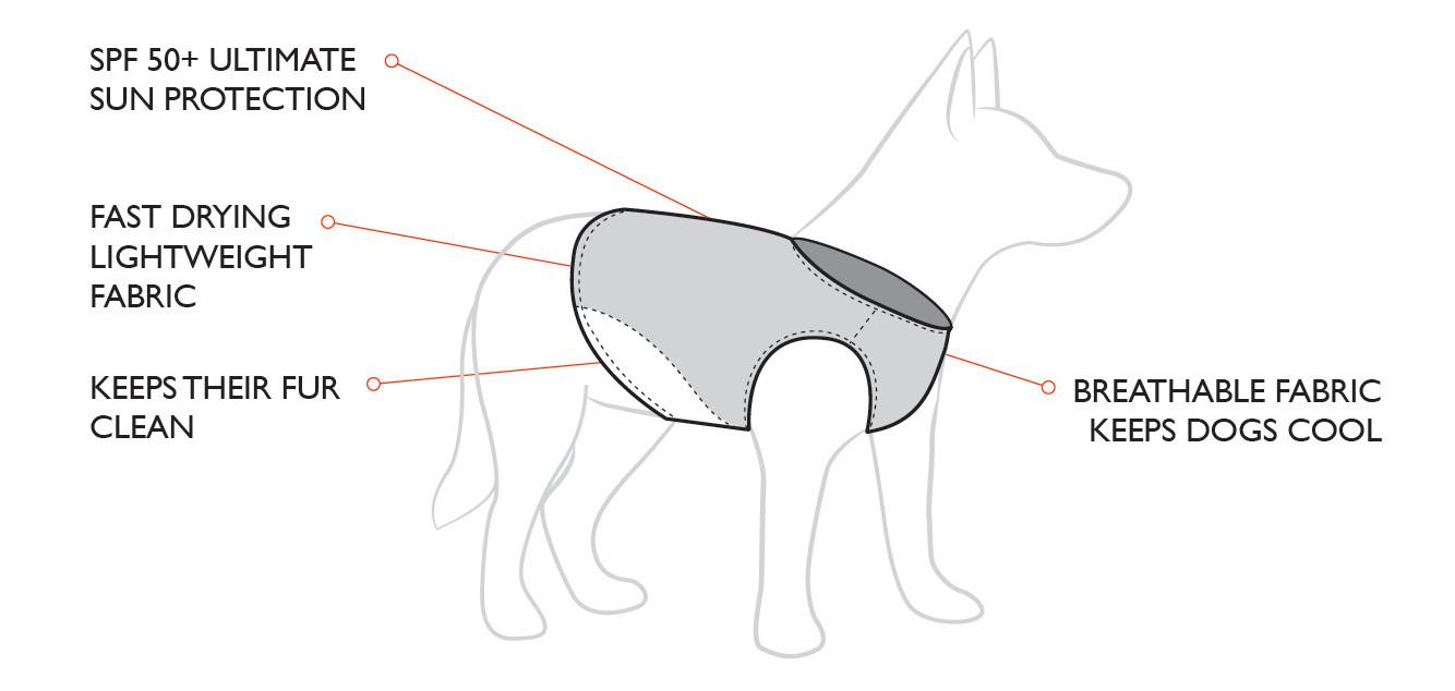 rashie-diagram.jpg
